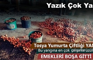 Tosya'da Yumurta ve Mantar Çiftliğinde Yangın