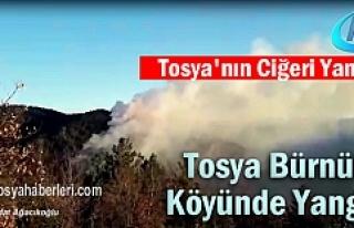 Tosya Bürnük Köyü Orman Yangın ( SON DAKİKA-VİDEO...