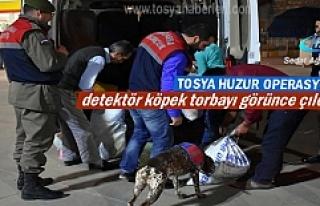 Tosya Huzur Operasyonuna detektör köpek damga vurdu