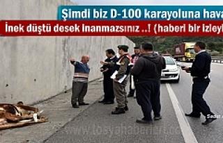 Tosya'da D-100 karayoluna havadan İnek düştü...