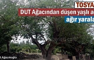 Tosya'da Dut ağacından düşen adam ağır...