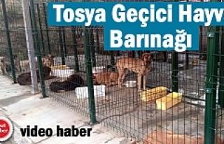 Tosya Belediyesi Geçici Hayvan Barınağı görüntüleri