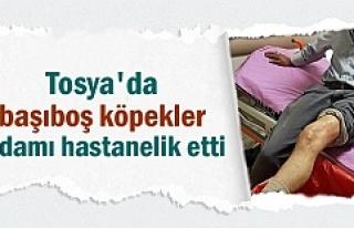 Tosya'da Köpeklerin saldırdığı adam hastanelik...