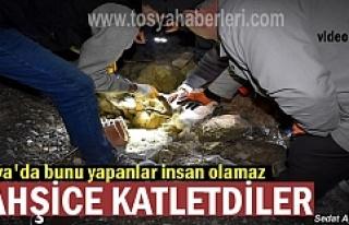 Tosya'da Vicdansızlar Vahşice Katletti