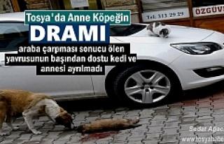 TOSYA'DA YAVRUSU ÖLEN ANNE KÖPEĞİN VE DOSTU...