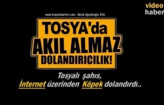 Tosya'da İnternet Üzerinden İlginç Köpek...
