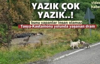 Tosya'da Başıboş Köpeklerin Kaldığı Barınak...