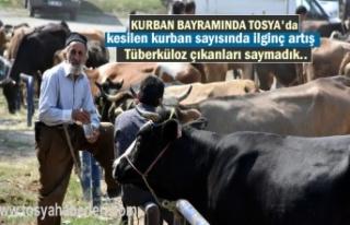 Tosya'da Kesimi Yapılan Kurbanlık Sayısında...