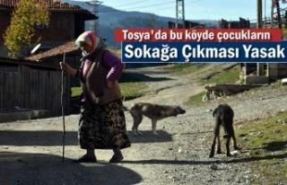 Tosya'da Bürnük Köyünü Uyuz ve Hastalıklı...