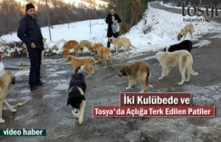 Tosya-Kastamonu Yolunda Sokak Köpekleri Açlıkla...