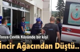 Tosya'da İncir Ağacından Düşen Kişi Yaralandı