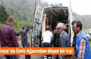 Kösen Köyünde Cevizden Düşen Şahıs Yaralandı