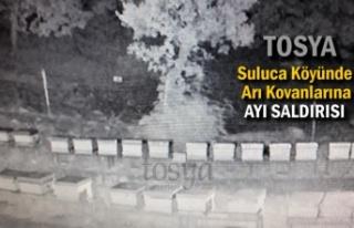 Tosya'da Arı Kovanlarına Ayı Saldırısı