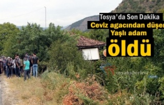 Tosya'da bir kişi Cevizden düşerek hayatını...