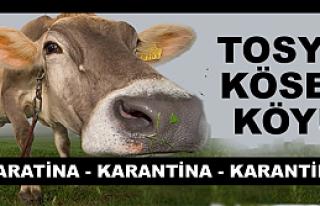Tosya Kösen Köyü Şap Hastalığından Karantinaya...