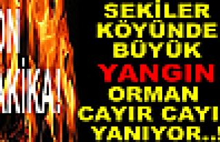 Tosya Sekiler Köyünde Büyük Yangın