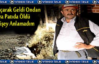 TOSYA'DA LEYLEK HAVADA ANSIZIN ÖLDÜ