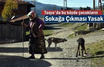 Tosya'da Bürnük Köyünü Uyuz ve Hastalıklı Köpekler Bastı