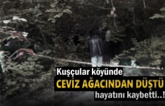 Tosya'da Ceviz Ağacından Düşen Şahıs Öldü