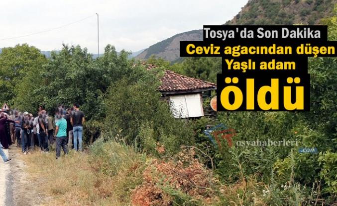 Tosya'da bir kişi Cevizden düşerek hayatını kaybetti