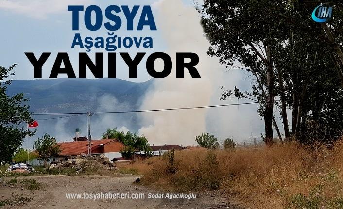 Tosya'nın Çeltik Ambarı Aşağıova Yanıyor