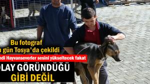 Tosya'da Sokak Köpekleri Kısırlaştırma Operasyonu