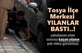 Tosya'da Deprem sonrası ilçe merkezde Yılan Yakalandı