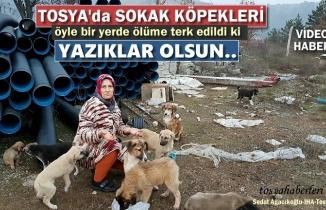Tosya'da hayvan barınağında sokak köpekleri ölüme terk edildi
