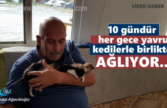 Her gece beş yavru kedi ile birlikte bende ağlıyorum