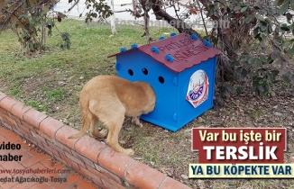 Tosya'da İlçe Merkezinde Pati Kulübeleri Sorun oluyor