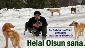 Tosya'da hayvansever bir vatandaş aç köpekler için her gün 50 km gidip geliyor