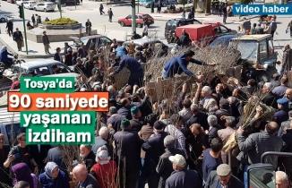 Tosya'da Fidan Dağıtımında İzdiham Yaşandı