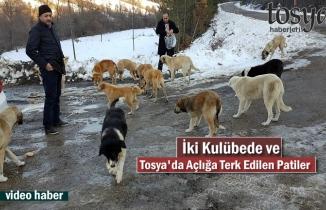 Tosya-Kastamonu Yolunda Sokak Köpekleri Açlıkla Mücadele Ediyor