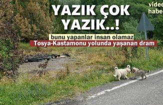 Tosya'da Başıboş Köpeklerin Kaldığı Barınak Yakıldı