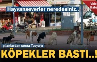 Tosya İlçe Merkezini köpekler bastı