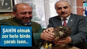 Tosya'da Yaralı Şahin kuşa Belediye sahip çıktı