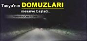 TOSYA'DA DOMUZLAR SÜRÜ HALİNDE