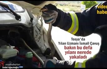 Tosya'da Aracın Motorunda Yılan Yakalandı