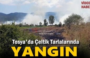 Tosya Aşağı Ova Çeltik Tarlasında Yangın