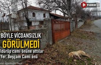 Tosya'da Cami Kapısı Önünde Öldürülmüş Köpek Bulundu
