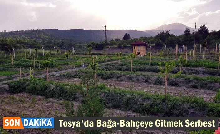 Tosya'da Hafta Sonu Bağ-Bahçe Gitme Kararı