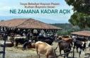 Tosya Hayvan Pazarı Kurban Öncesi Ne Zamana Kadar...