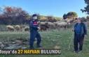TOSYA'DA 27 HAYVAN BULUNDU