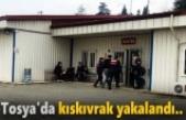 TOSYA'DA KISKIVRAK YAKALANDI