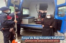 Tosya'da Bağ Hırsızlarının Çaldıkları Mal Sahiplerine Teslim Edildi