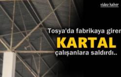 Tosya'da İşyerine Kartal Girdi