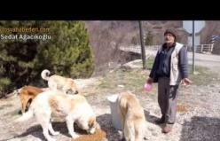 Tosya'da Hayvansever Koronavirüs Tehlikesine rağmen