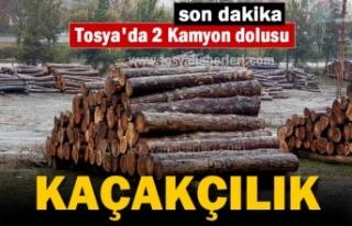 Tosya'da Kaçak Kesim yapılmış 2 Kamyon Tomruk...