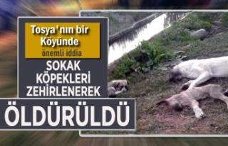 Tosya'nın Bir Köyünde Köpek Zehirlenme İddiası