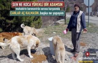 TOSYA'DA HAYVANSEVER VATANDAŞ KORONAVİRÜSE...